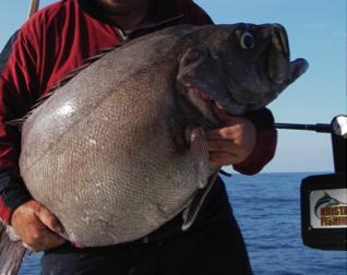 Il bolentino profondo pescaplanet - Pesci comuni in tavola ...